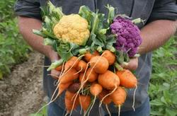 Products from Organic Gardening